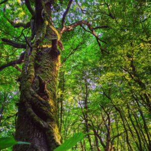 Bosco del Cerquone di Rocca Priora, foresta originaria